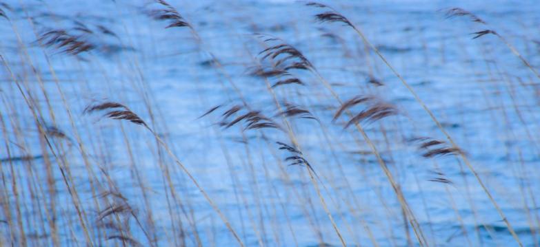 Sunbiggin Tarn Reeds
