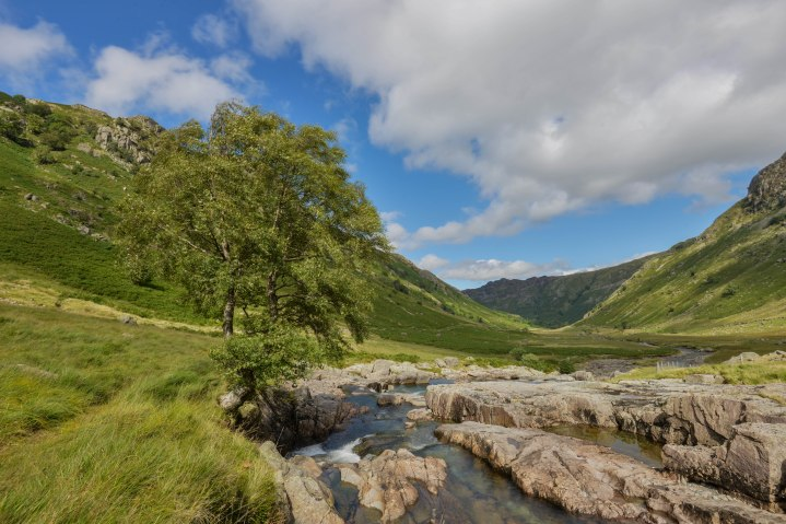 Langstrath Birch