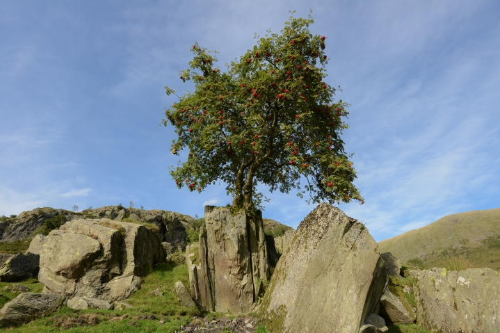 The Kentmere Rowan