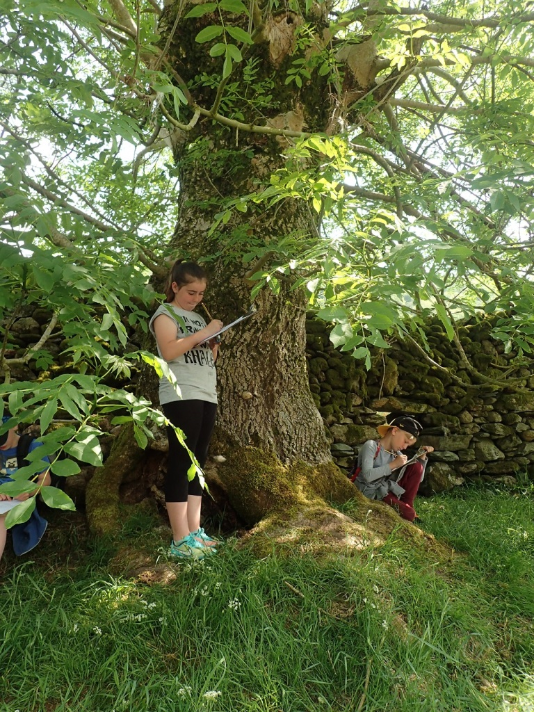 Children getting close to an ash tree on the way to the Kentmere Rowan