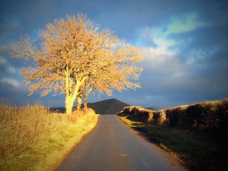 Dufton Tree Alex Jacob-Whitworth image