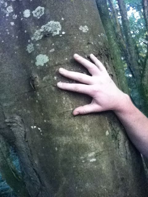Annabel Bank's hand on the Stopping Tree