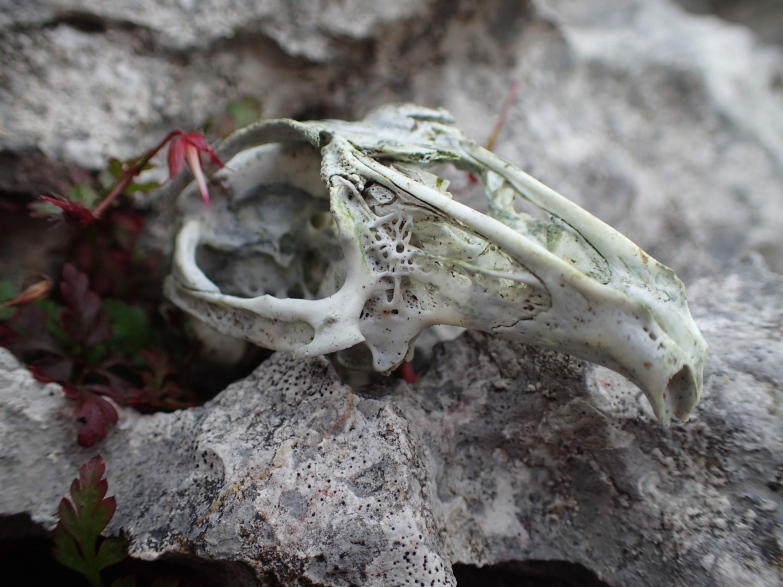 bird skull beneath the hawthorn