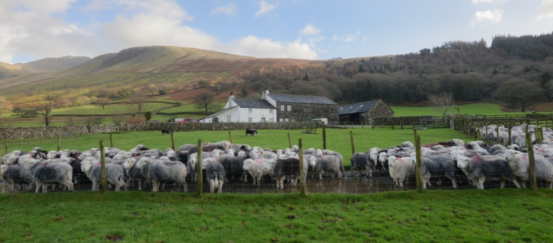 Wasdale Head Hall Farm, with Scafell behind