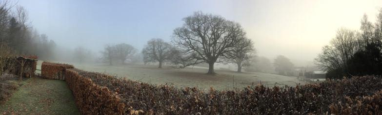 keith bamber oak tree