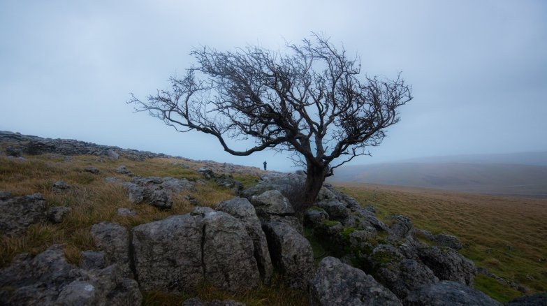 Little Asby Hawthorn, Limestone pavement