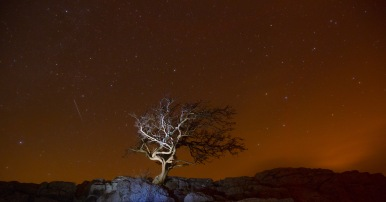 Little Asby Hawthorn under starlight