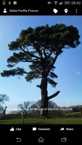 Upton pine: Amanda Drake