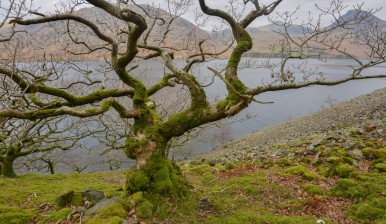 ancient oak woodland, wasdale