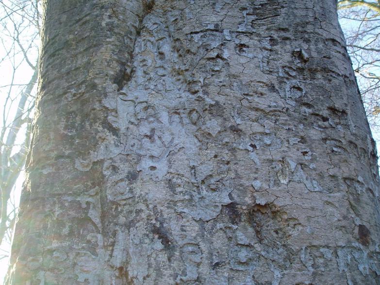 Wittenham Clump Poem Tree (Angi Holden)