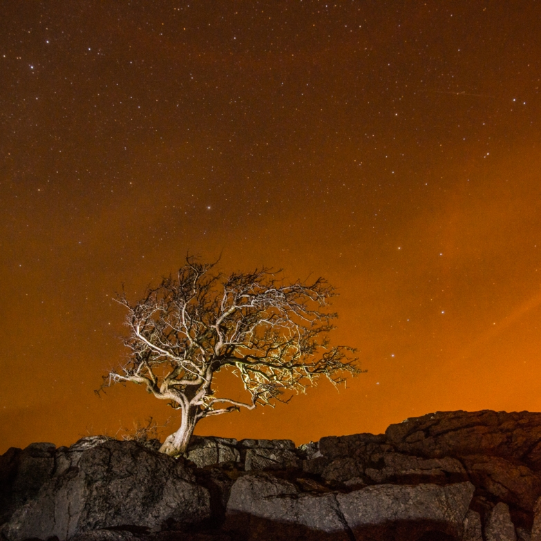 Little Asby Hawthorn at night