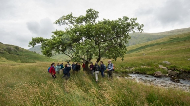 The Troutbeck Alder from The Long View