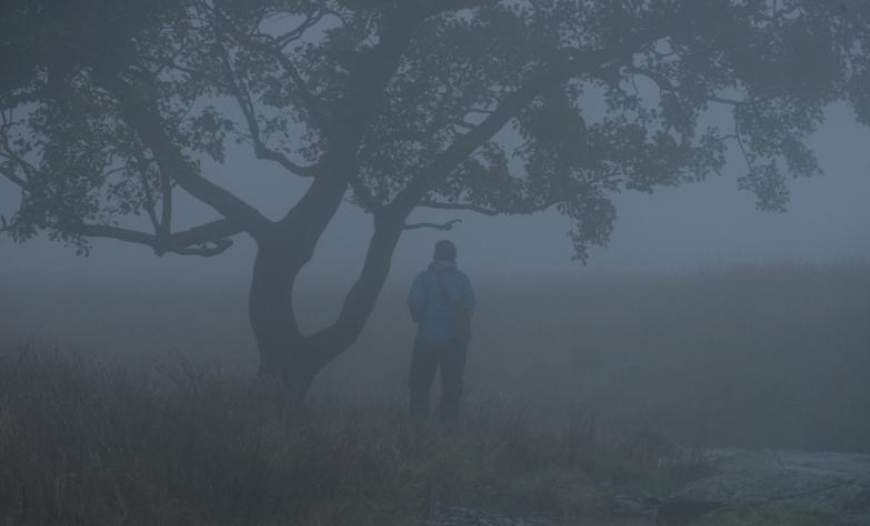 Troutbeck Alder in mist