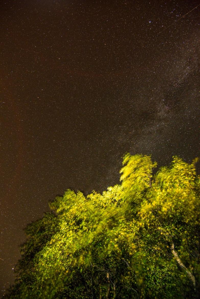 beneath the tree - stars