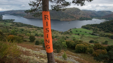 'Rising' on the Glencoyne Pine