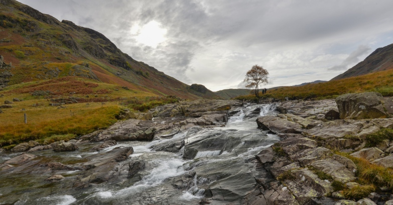 Langstrath Beck flowing past the Langstrath Birch in Borrowdale