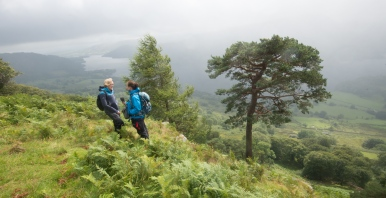 At the Glencoyne Pine