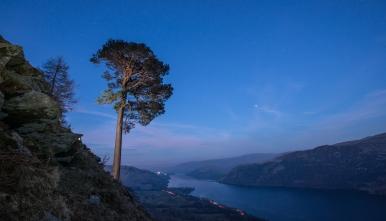 Pine at night