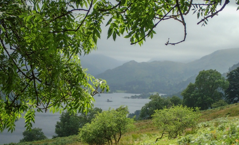 View of Ullswater from beneath an ash.