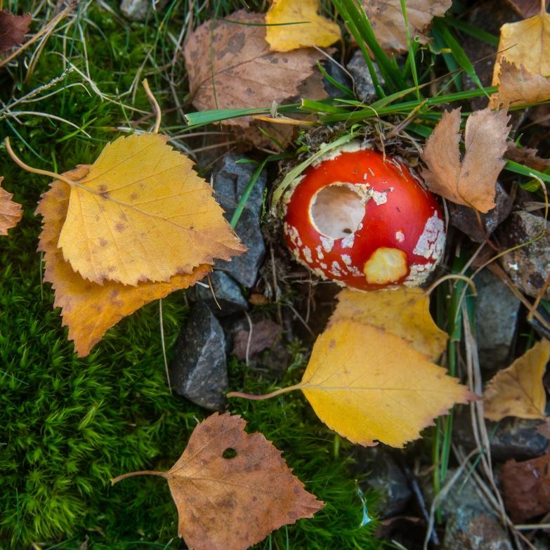 Fungi beneath a birch