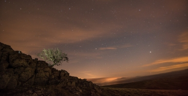 stars at the Little Asby Hawthorn