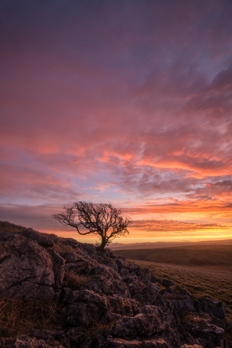 The Little Asby Hawthorn : Tree at Sunrise