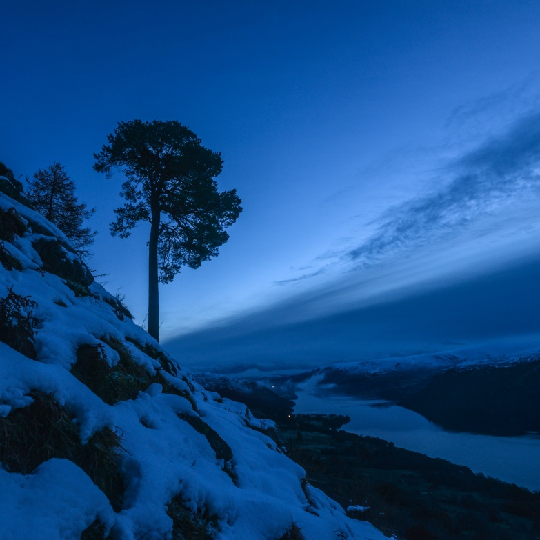 Glencoyne Pine at Dawn