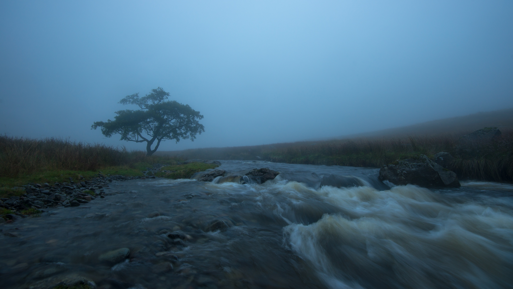 Trout Beck Alder in the murk.