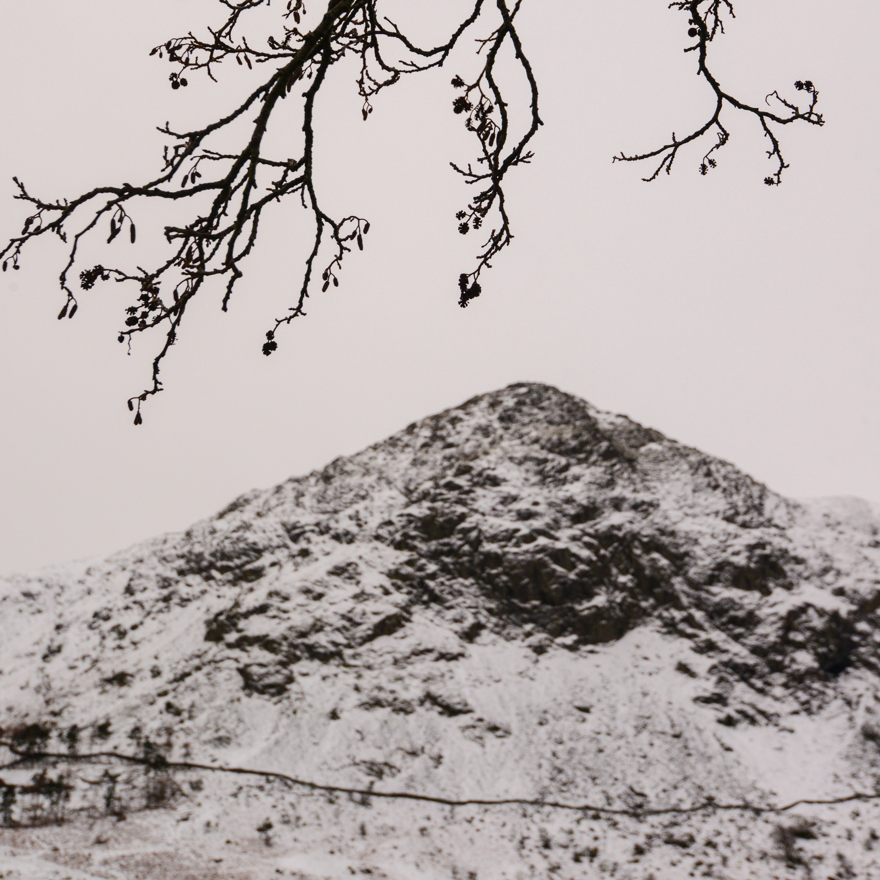 Yoke from beneath and alder in Kentmere