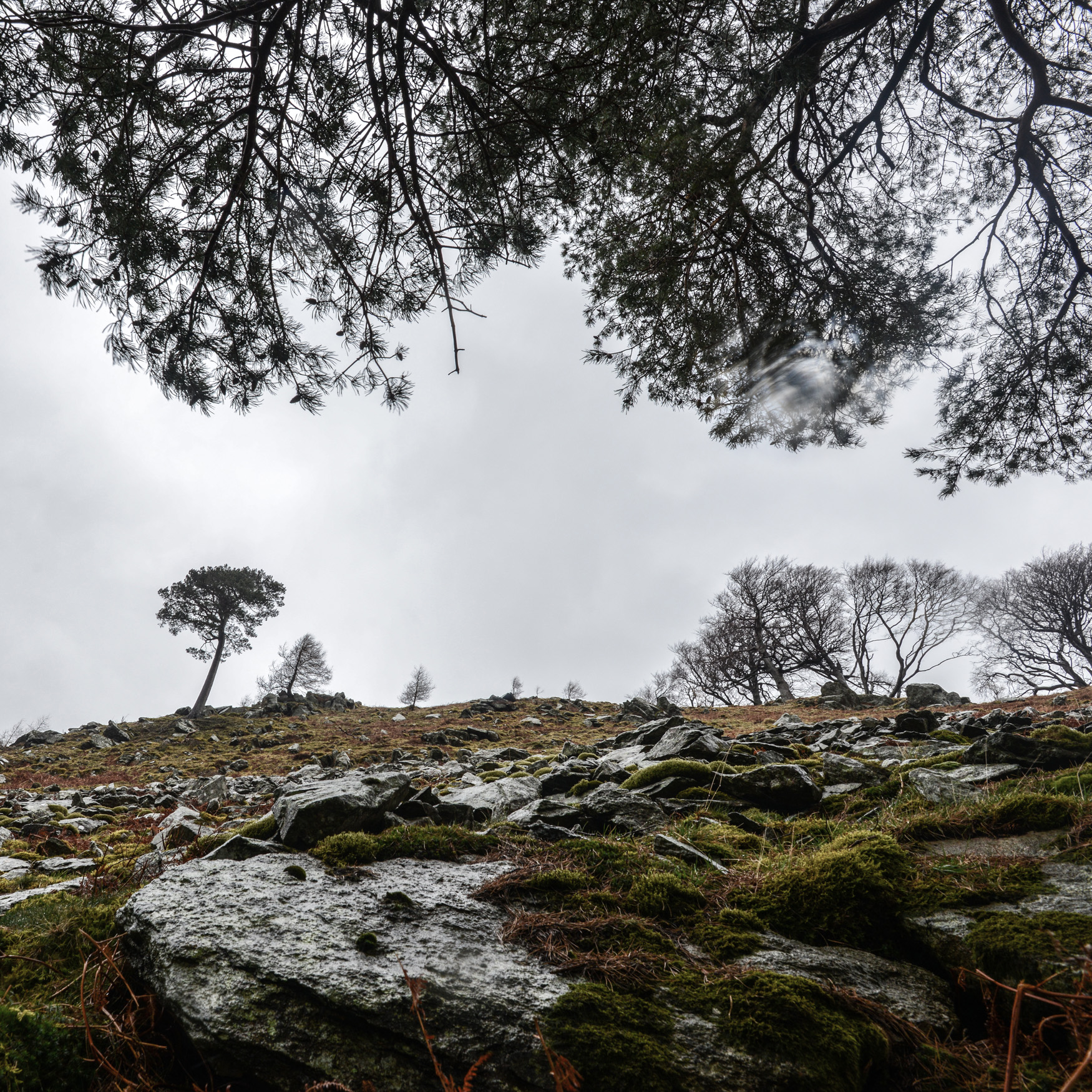 Glencoyne Pine from beneath the Cup of Nine.