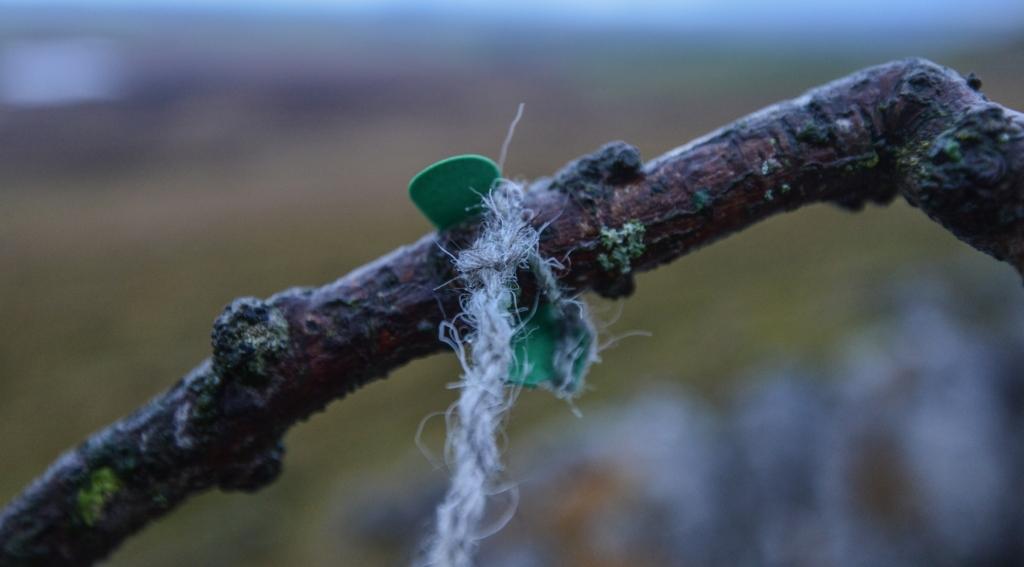 torn leaf, herdwick wool left