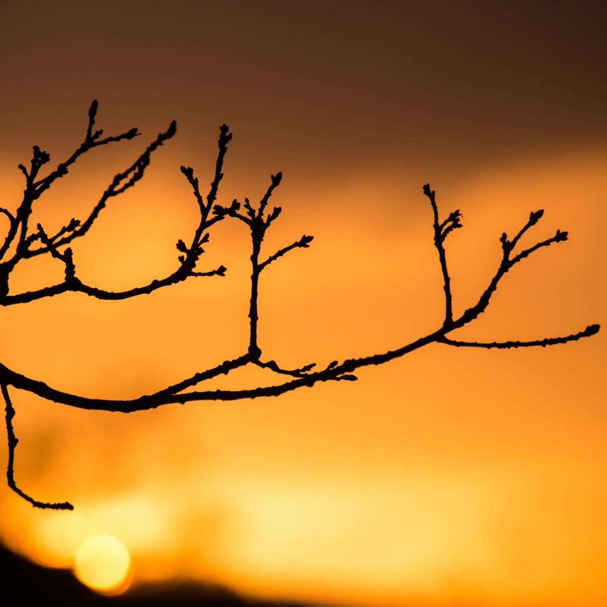 Sunset behing the Wasdale Oak in winter