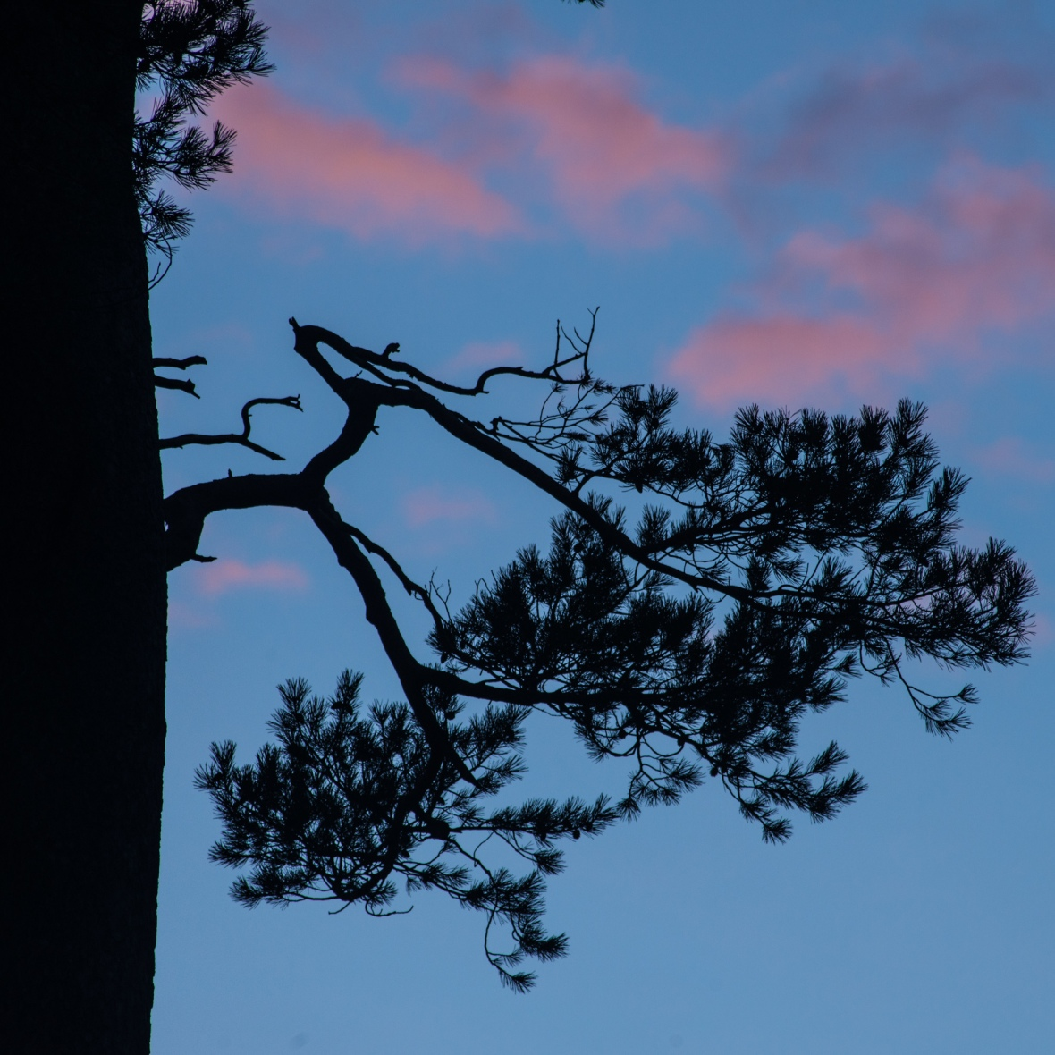 the Glencoyne Pine sunrise