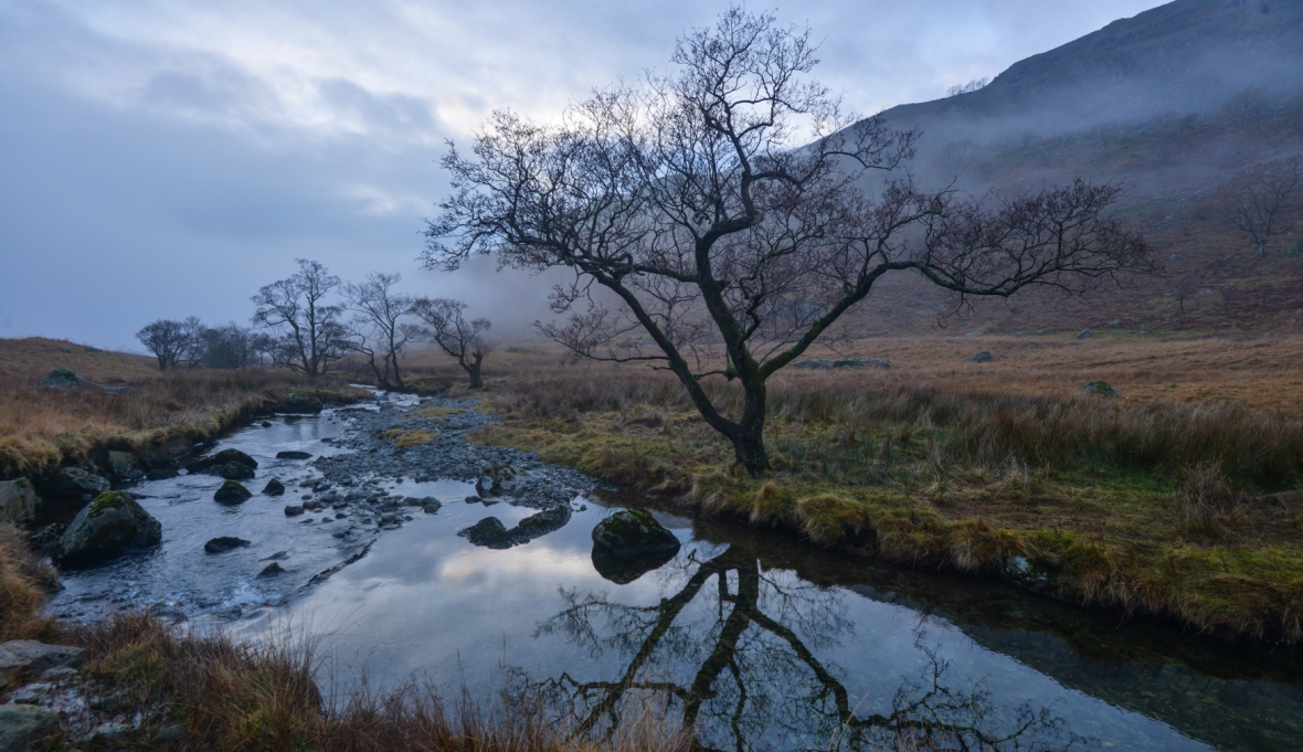 The Trout Beck Alder in winter