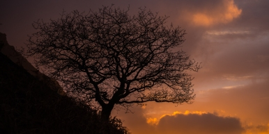 Wasdale Oak with the brief sunset