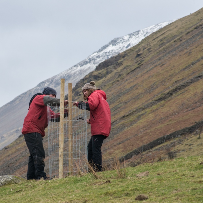 Placing a wire cage under Lingmell.