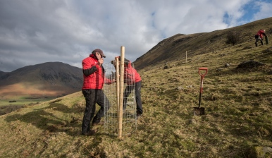 Making one of the 50 cages built in Wasdale.