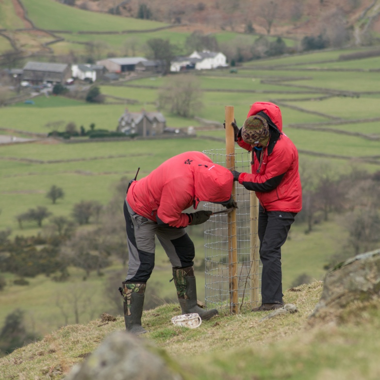 building the cages at Wasdale.