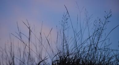 grasses below the Langstrath Birch