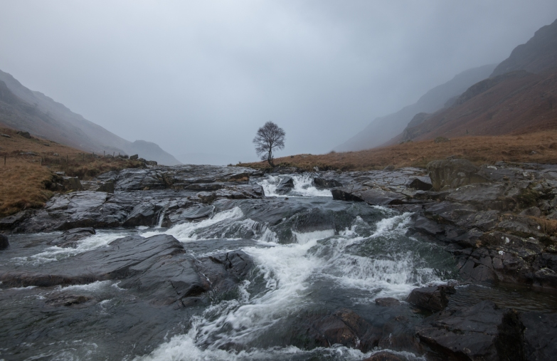 Langstrath Birch in the soft mid-winter rain