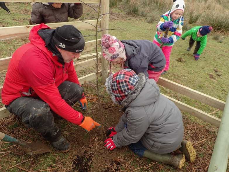 Planting crab apples with pupils from Patterdale School