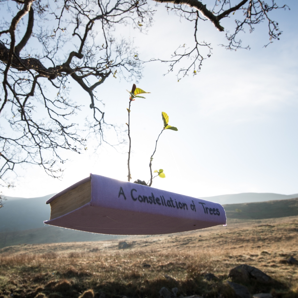 The Long View installation at the Troutbeck Alder: A Constellation of Trees