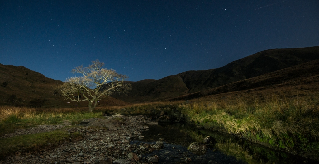 Trout Beck Alder and books, suspended, under moonlight