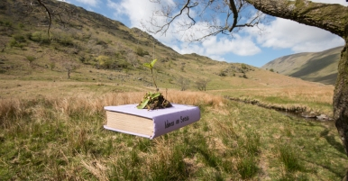 Ideas as Seeds The Long View Installation Number 7: Book wrapped in violet cloth with sapling inside