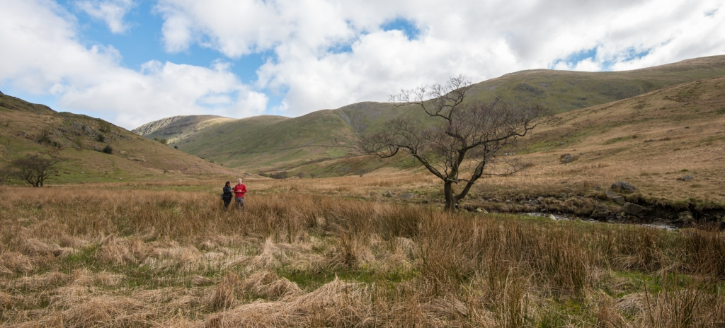 Trout Beck Alder April 2017 with John Pring, National Trust