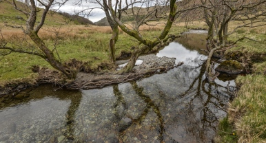 Alder roots in water, Trout Beck