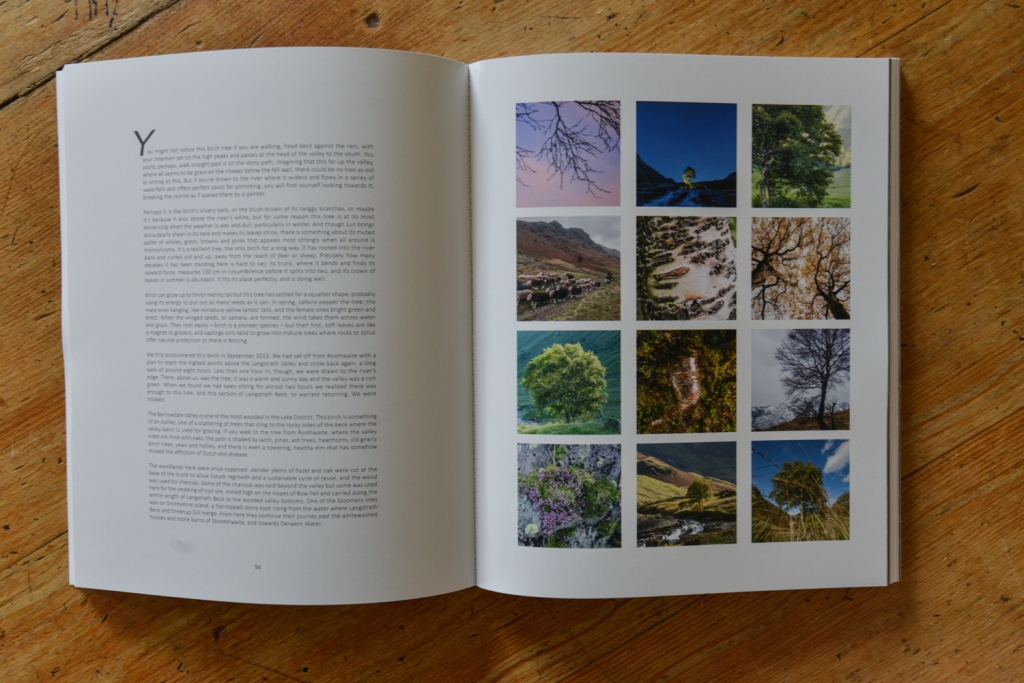 The Long View book - section from the Langstrath Birch