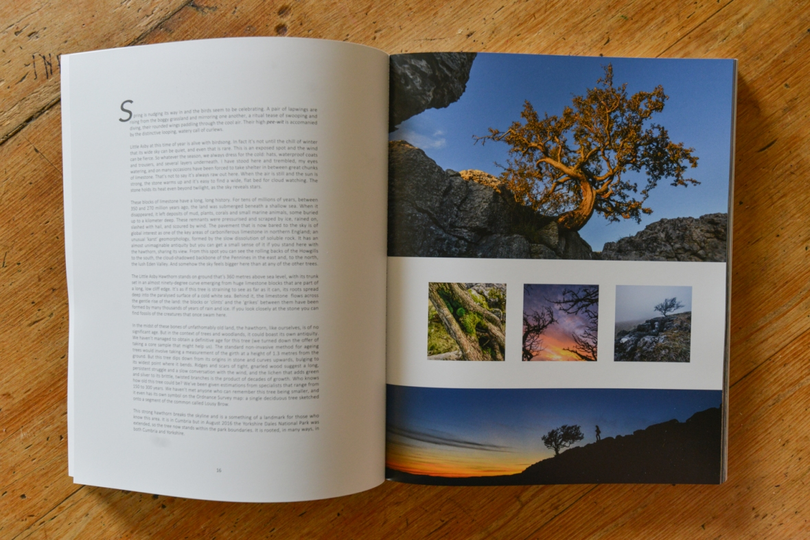 The Long View book - section from the Little Asby Hawthorn