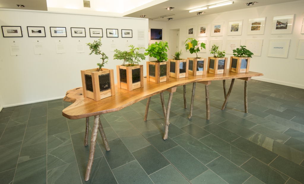 Life Support. Seven real trees representing the seven different tree types we responded to through The Long View. Planters made of ash, the support is a single piece of elm.