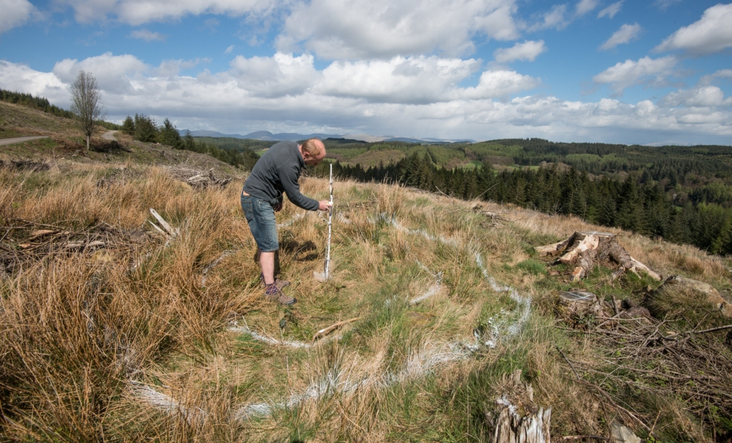 Rob marking out the site of the treefold at Grizedale